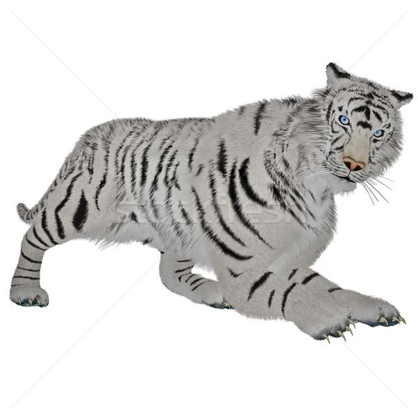 White tiger hunting Stock photo © Elenarts