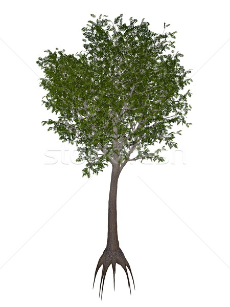 European or common ash, fraxinus excelsior tree - 3D render Stock photo © Elenarts