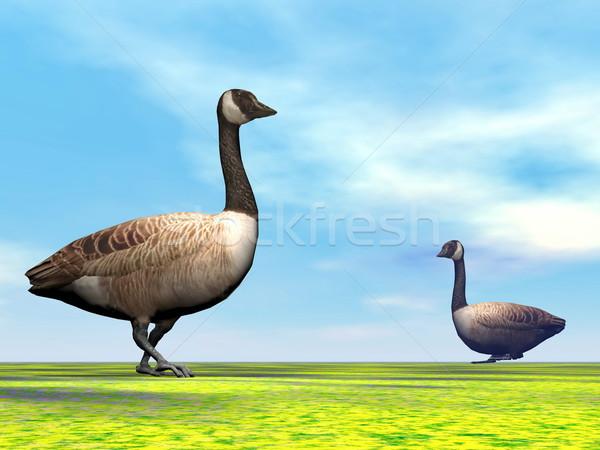 Canadian geese - 3D render Stock photo © Elenarts