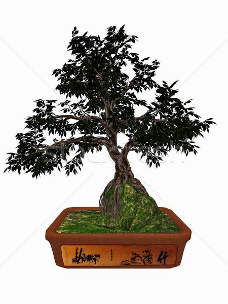 дерево бонсай 3d визуализации изолированный белый природы Сток-фото © Elenarts