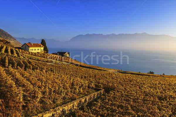 Bölge İsviçre bağ göl sonbahar Stok fotoğraf © Elenarts