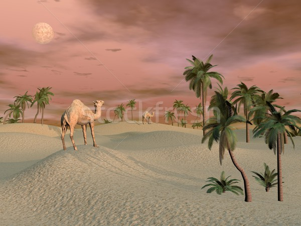 Camels in the desert - 3D render Stock photo © Elenarts