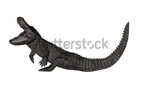 Krokodil omhoog 3d render geïsoleerd witte natuur Stockfoto © Elenarts