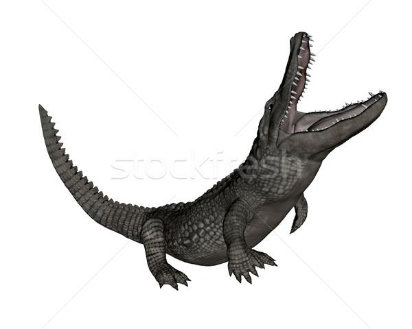Krokodil yukarı 3d render yalıtılmış beyaz doğa Stok fotoğraf © Elenarts