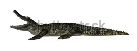 Crocodile relaxing - 3D render Stock photo © Elenarts