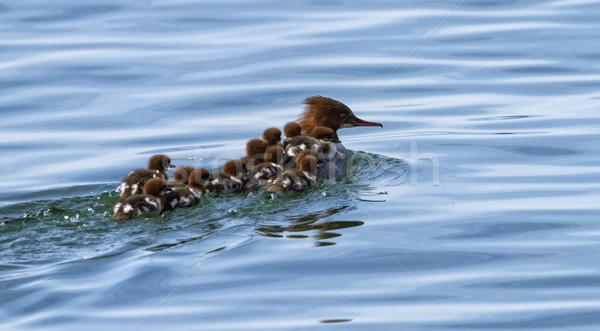 женщины младенцы 12 назад плаванию воды Сток-фото © Elenarts