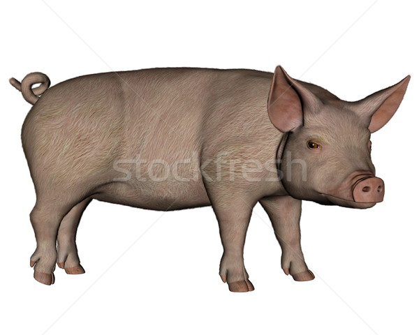 Pig standing - 3D render Stock photo © Elenarts