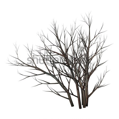 Dead tree bush by night - 3D render Stock photo © Elenarts