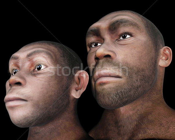 Male and female homo eretus - 3D render Stock photo © Elenarts