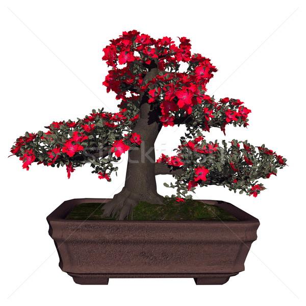 Satsuki azalea tree bonsai - 3D render Stock photo © Elenarts
