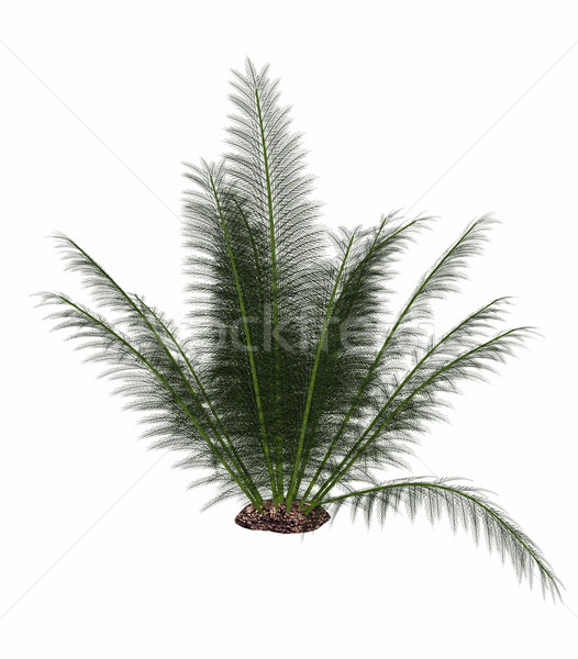 Onychiopsis prehistoric fern - 3D render Stock photo © Elenarts