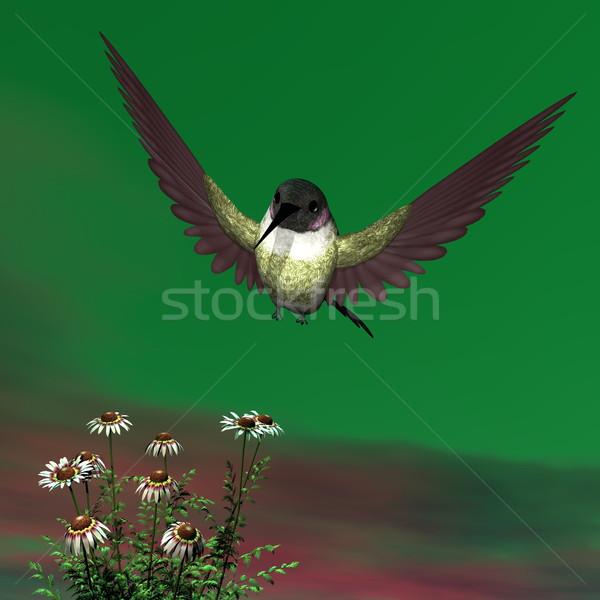 ハチドリ 3dのレンダリング 飛行 ヒナギク 花 鳥 ストックフォト © Elenarts