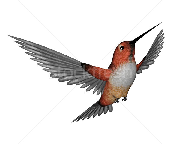 Allen hummingbird - 3D render Stock photo © Elenarts
