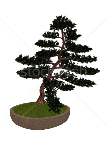 Hinoki false cypress tree bonsai - 3D render Stock photo © Elenarts