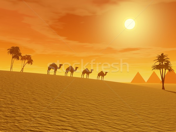 Camels in the desert Stock photo © Elenarts