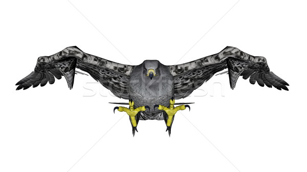 Grey falcon flying - 3D render Stock photo © Elenarts