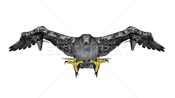 Gris halcón vuelo 3d aislado blanco Foto stock © Elenarts