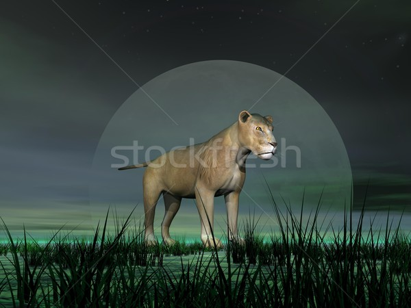 Lioness by moonlight Stock photo © Elenarts