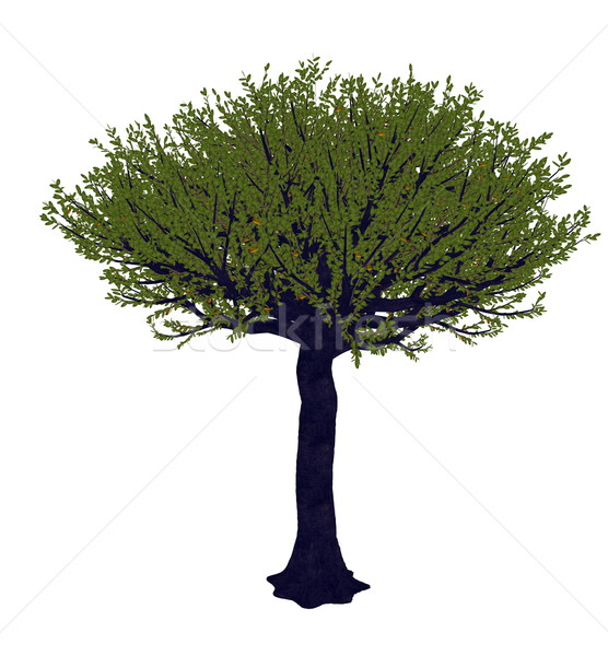 Forest sandpaper fig or tree, ficus exasperata - 3D render Stock photo © Elenarts