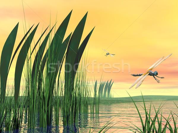 Dragonflies upon pond Stock photo © Elenarts