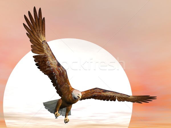 Eagle by sunset - 3D render Stock photo © Elenarts