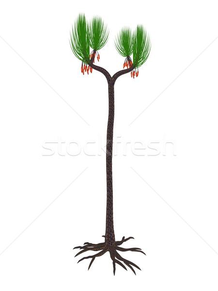 Sigillaria scutellata prehistoric plant - 3D render Stock photo © Elenarts