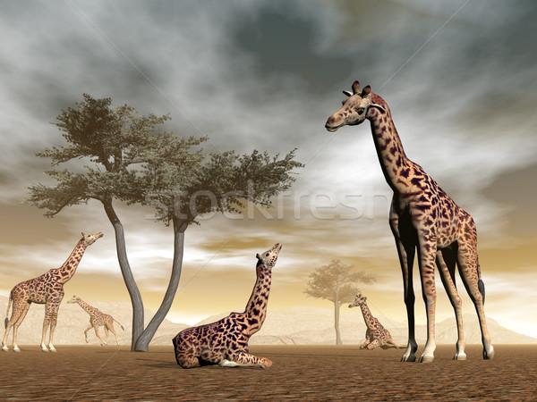 Foto stock: Girafas · savana · 3d · render · girafa · rebanho · bebê