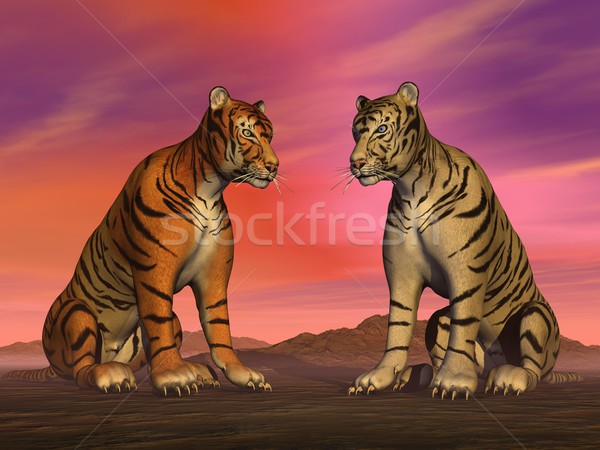 Two tigers and colorful sky Stock photo © Elenarts