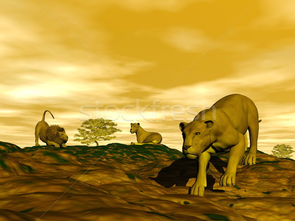 Group of lions in the savannah Stock photo © Elenarts