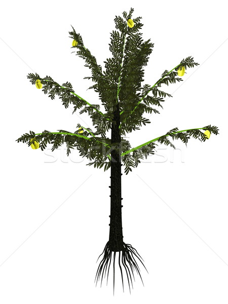 Alethopteris serli prehistoric tree - 3D render Stock photo © Elenarts