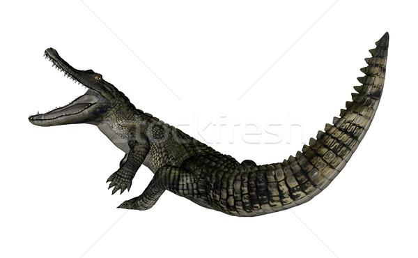 Caiman roaring up - 3D render Stock photo © Elenarts