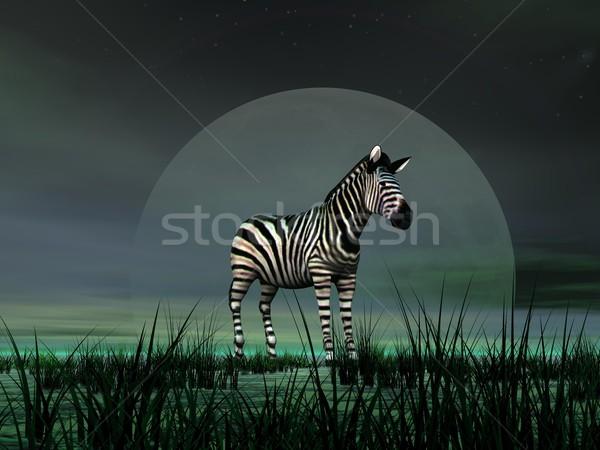 Zebra światło księżyca stałego zielona trawa trawy charakter Zdjęcia stock © Elenarts