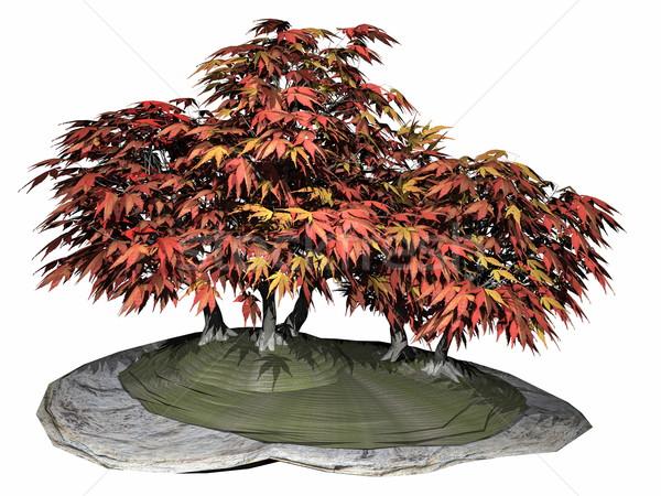 Японский клен дерево бонсай 3d визуализации белый Сток-фото © Elenarts