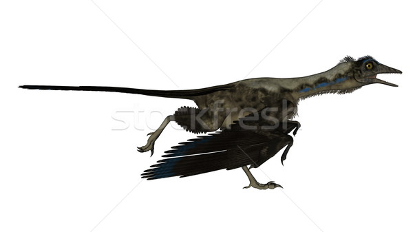 Archaeopteryx bird dinosaur running - 3D render Stock photo © Elenarts