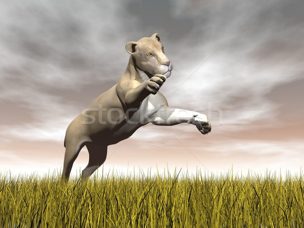 Lioness hunting - 3D render Stock photo © Elenarts