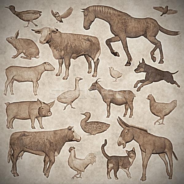 набор сельскохозяйственных животных Vintage стиль 3d визуализации изолированный Сток-фото © Elenarts