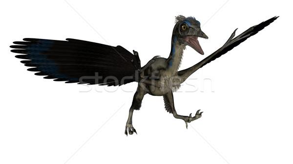 Vogel dinosaurus landing 3d render geïsoleerd witte Stockfoto © Elenarts