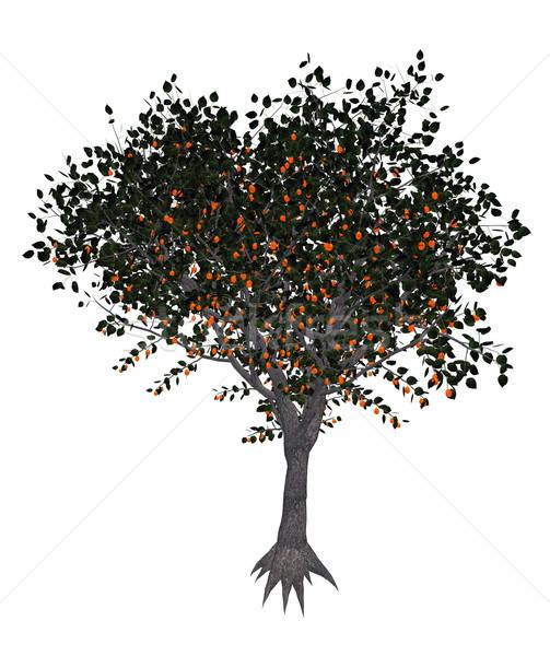 Apricot tree - 3D render Stock photo © Elenarts