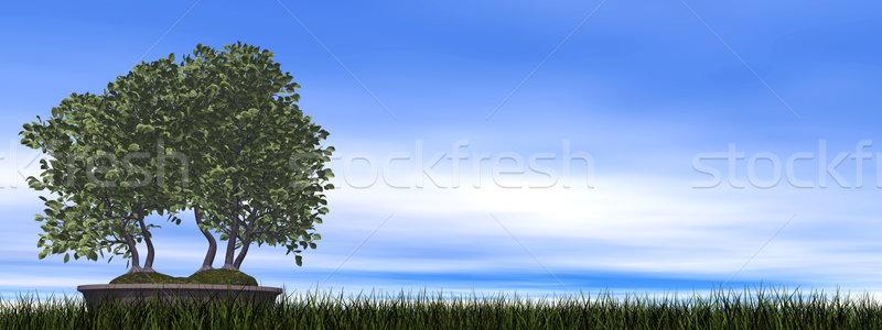 Europese boom bonsai 3d render groen gras hemel Stockfoto © Elenarts