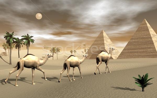 Верблюды пирамидами 3d визуализации три ходьбе пустыне Сток-фото © Elenarts