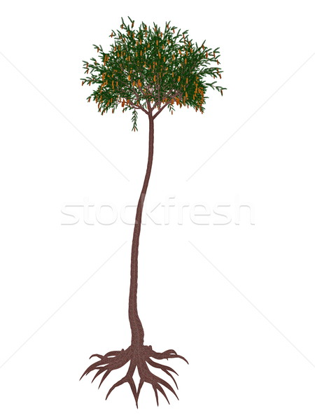 Lepidodendron aculeatum prehistoric tree - 3D render Stock photo © Elenarts