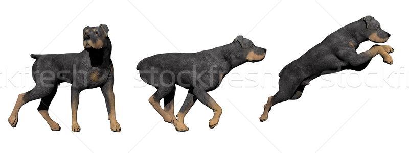 ロットワイラー 犬 3dのレンダリング 3  犬 白 ストックフォト © Elenarts