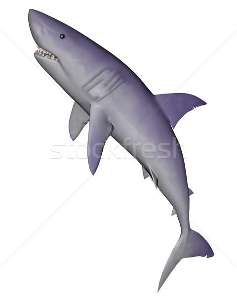 Shark - 3D render Stock photo © Elenarts