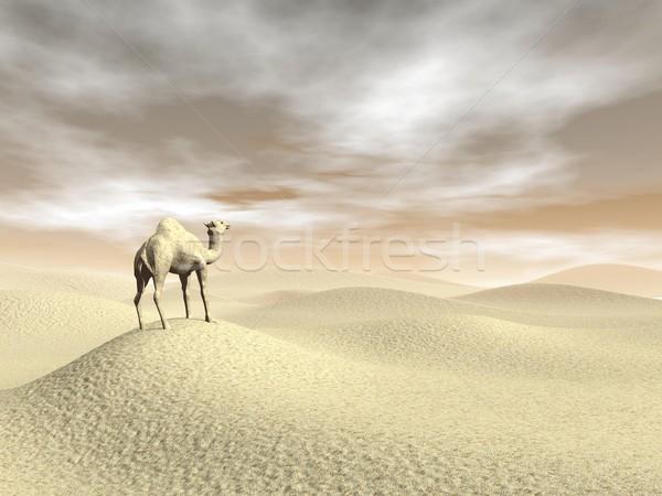 верблюда пустыне 3d визуализации Постоянный коричневый закат Сток-фото © Elenarts