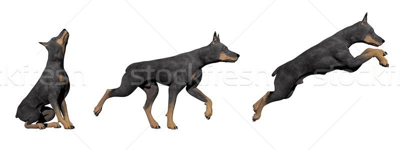 доберман собака 3d визуализации три собаки белый Сток-фото © Elenarts