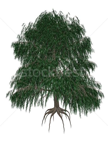 Babylon or weeping willow, salix babylonica tree - 3D render Stock photo © Elenarts
