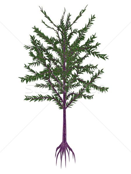 Dicroidium prehistoric seed plant - 3D render Stock photo © Elenarts
