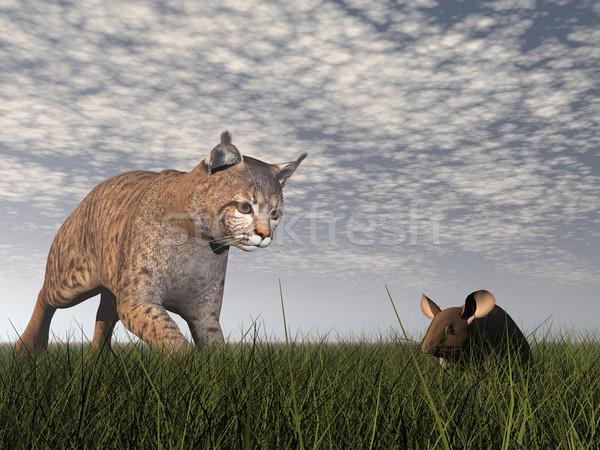 Bobcat hunting mouse - 3D render Stock photo © Elenarts
