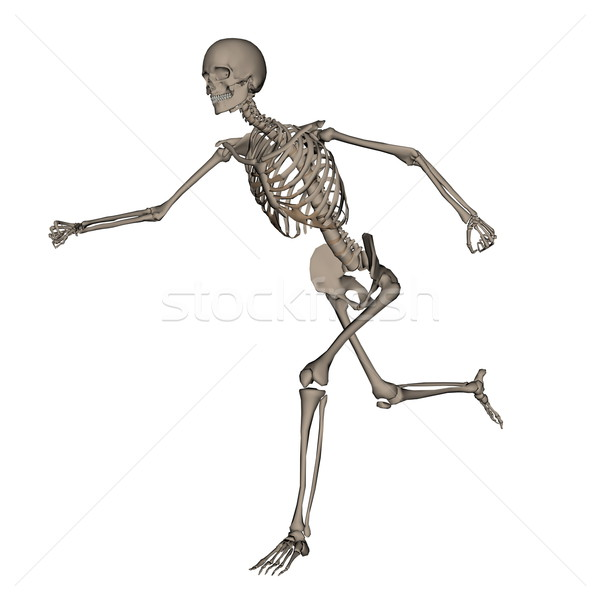 Human skeleton running- 3D render Stock photo © Elenarts