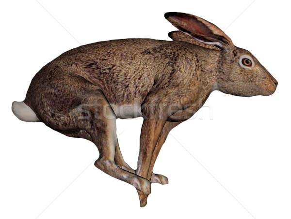 Running hare Stock photo © Elenarts